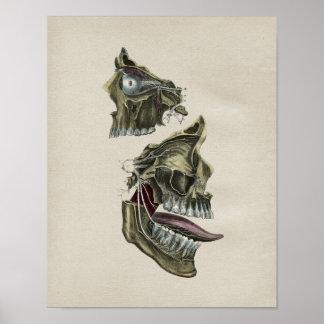 Human Facial Nerves Anatomy Vintage Print