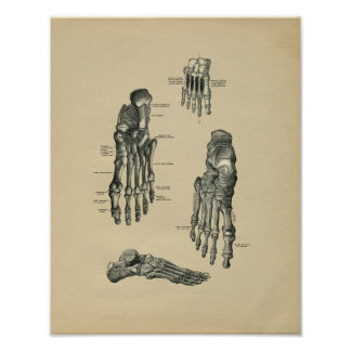 Human Foot Anatomy 1902 Vintage Print