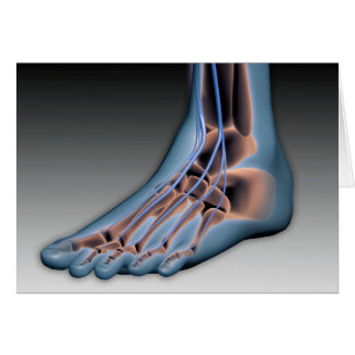 Human Foot With Nervous System 1 Card