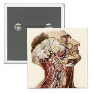 Human Head Anatomy Design Button