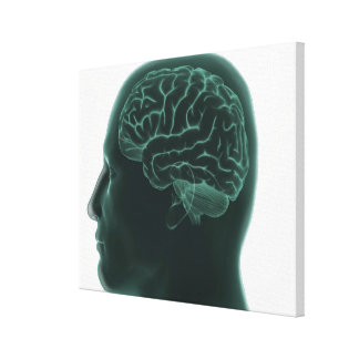 Human head in profile showing the brain canvas print