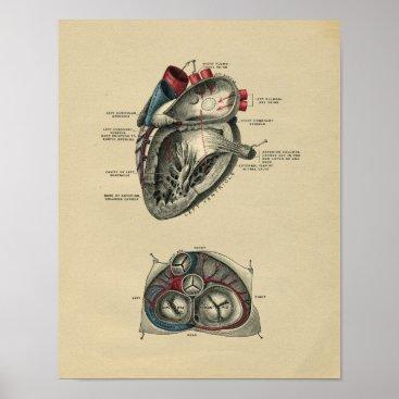 Valentines Themed Human Heart Anatomy 1902 Vintage Print