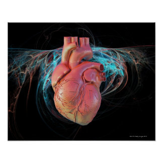 Human heart, computer artwork. poster