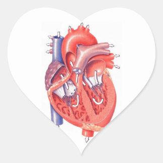 Human Heart Heart Stickers