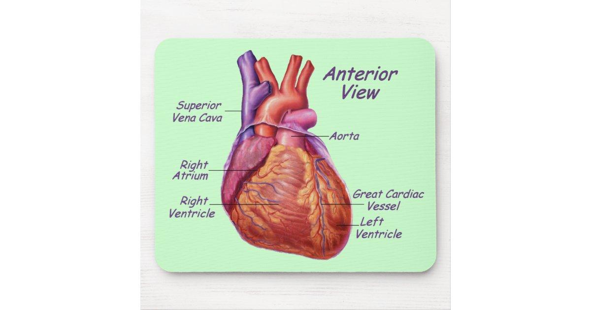 Human Heart Labeled Mousepad Zazzle