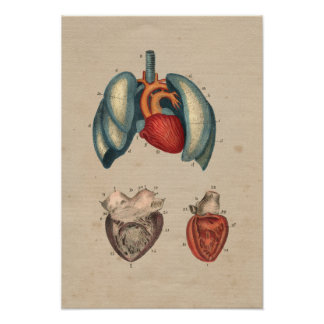 Human Heart Lungs Anatomy 1841 Print