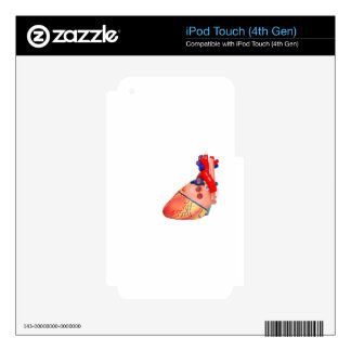 Human heart model on white background decal for iPod touch 4G