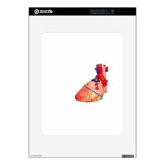 Human heart model on white background decal for the iPad