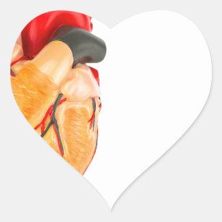 Human heart model on white background heart sticker