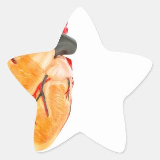 Human heart model on white background star sticker