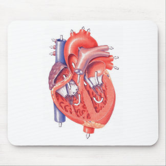 Human Heart Mouse Pad