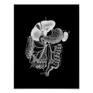 Human Internal Anatomy in Black and White Print