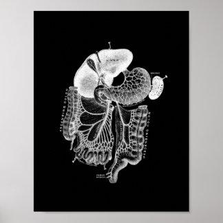 Human Internal Anatomy in Black and White Print