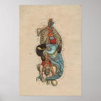 Human Internal Artery Anatomy 1841 Print