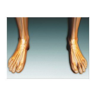 Human Legs And Feet With Nervous System Canvas Print