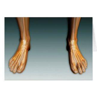 Human Legs And Feet With Nervous System Card