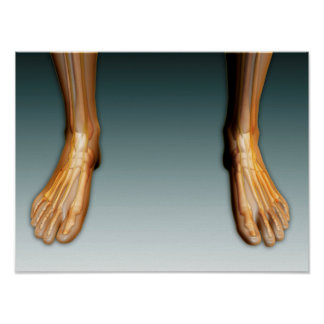 Human Legs And Feet With Nervous System Poster