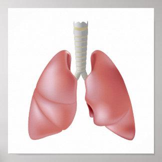 Human lung anatomy Poster