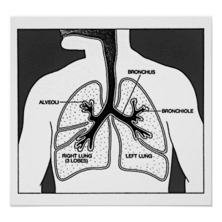 Human Lungs Medical Diagram Poster