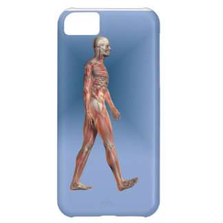 Human Male showing skeleton and Musculature Case For iPhone 5C