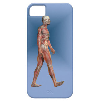 Human Male showing skeleton and Musculature iPhone SE/5/5s Case
