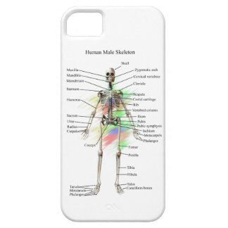 Human Male Skeleton on an iphone 5 case