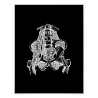 Human Muscle Anatomy in Black and White Print