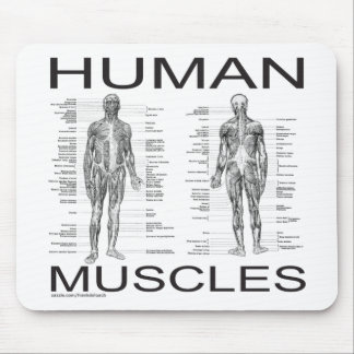 Human Muscles and Anatomy Mouse Pad