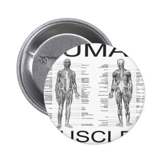 Human Muscles and Anatomy Pinback Button