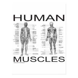 Human Muscles and Anatomy Postcard