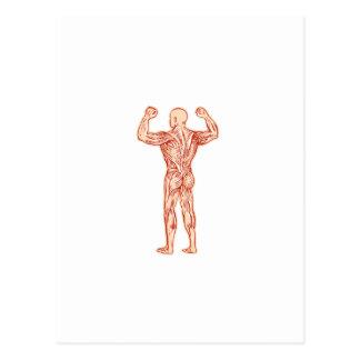 Human Muscular System Anatomy Etching Postcard
