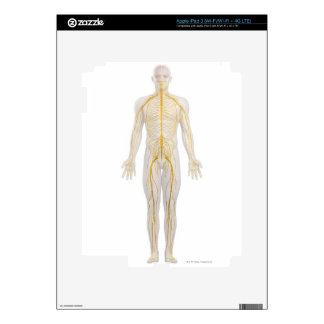 Human Nervous System 2 Skin For iPad 3