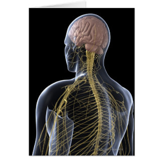 Human Nervous System Card