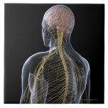 Human Nervous System Ceramic Tile