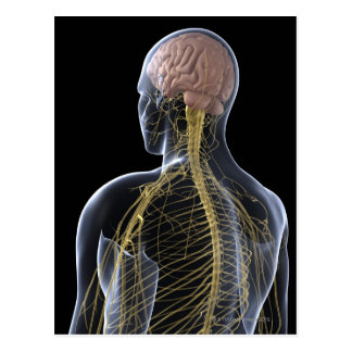 Human Nervous System Postcard