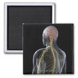 Human Nervous System Refrigerator Magnet