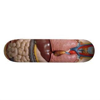 Human Organs, The Thorax Skateboard Deck