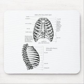 Human rib cage mouse pad