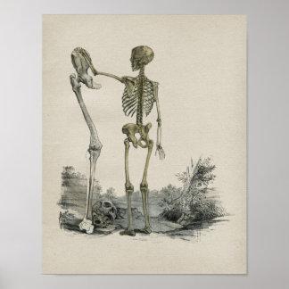 Human Skeleton Anatomy Vintage Print