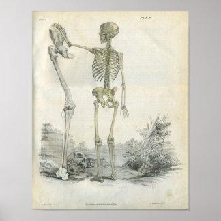 Human Skeleton Art Print
