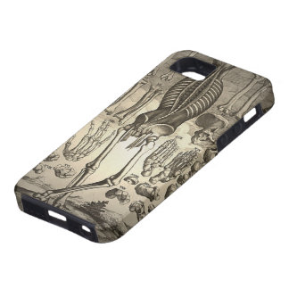 Human Skeleton ca 1741 iPhone 5 Covers
