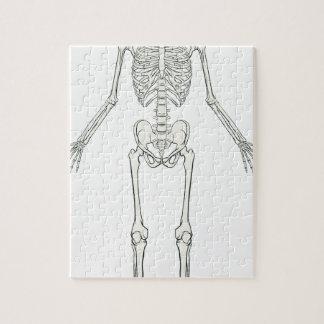 human skeleton jigsaw puzzle – kefei04, Skeleton