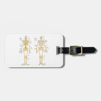 Human Skeleton labeled anatomy chart Bag Tag