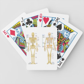 Human Skeleton labeled anatomy chart Bicycle Playing Cards