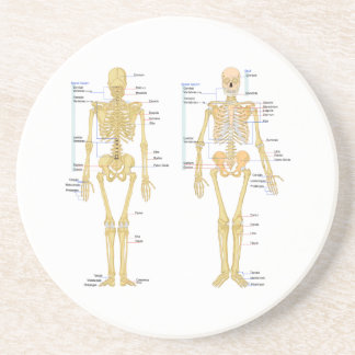 Human Skeleton labeled anatomy chart Drink Coaster