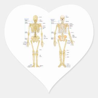 Human Skeleton labeled anatomy chart Heart Sticker