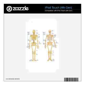 Human Skeleton labeled anatomy chart iPod Touch 4G Decal