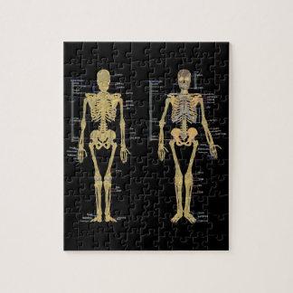 human anatomy jigsaw puzzles | zazzle, Skeleton