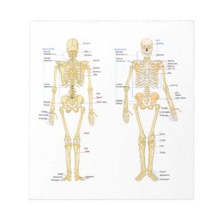 Human Skeleton labeled anatomy chart Notepad