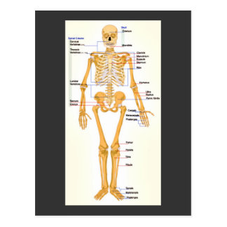 Human Skeleton Labeled Postcard